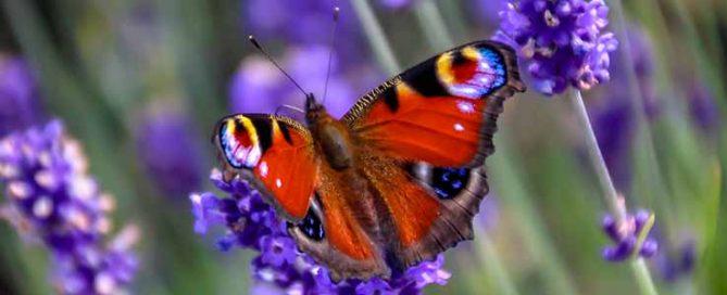 Walk on The Wild Side - Burston Garden Centre Blog
