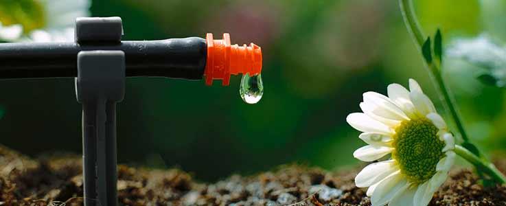 Be water wise blog - featured image - Burston Garden Centre