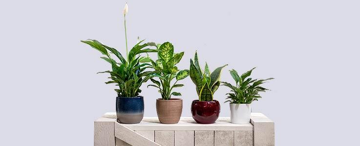 House Plants Blog