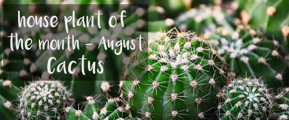 August House Plant of The Month - Cactus