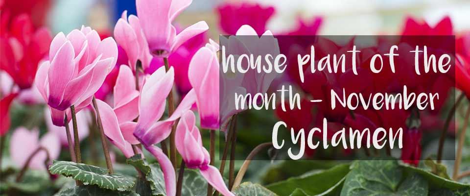 November House Plant of the Month at Burston Garden Centre