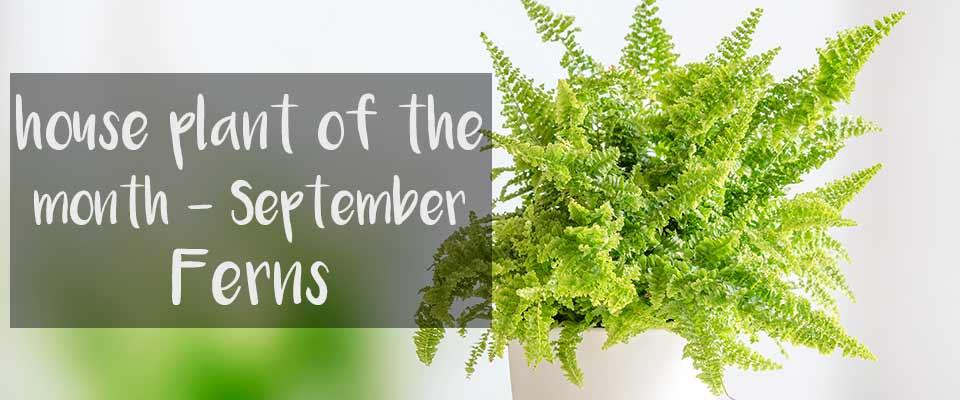 September House Plant of the Month at Burston Garden Centre