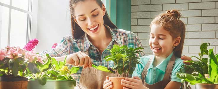Kids Corner - House Plants