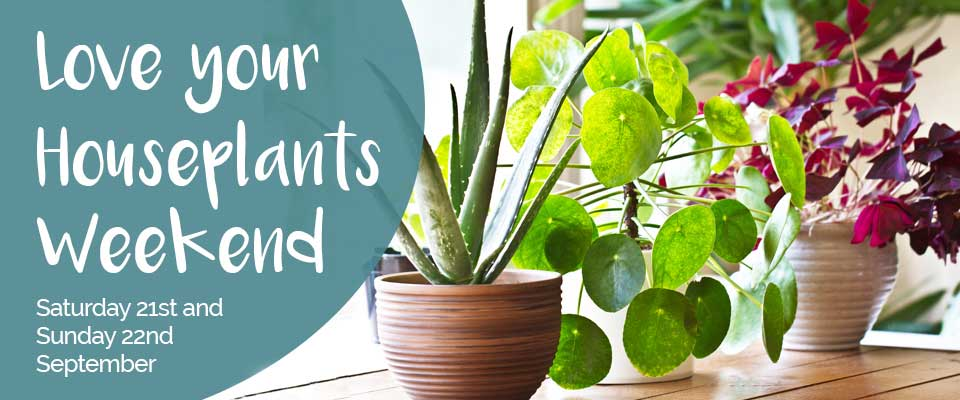 Love Your Houseplants Event Web Slider