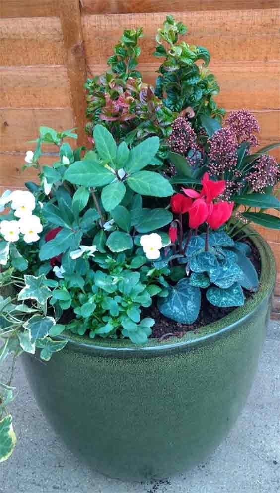 Simple plants arrangement - perfect for a semi shady front door