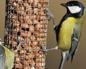THE RSPB BIG GARDEN BIRD WATCH