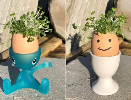 Kid's Corner: How to Make A Cress Head