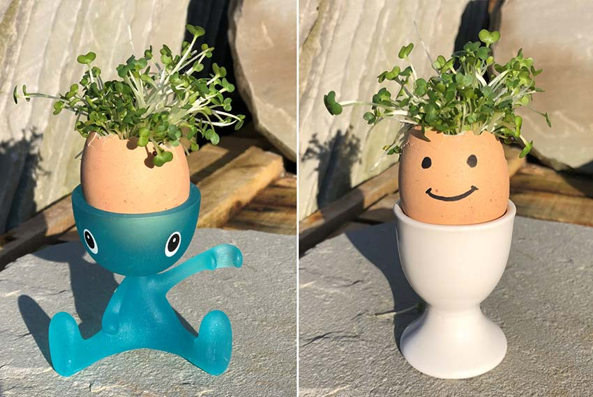 Kids Corner: How to Make A Cress Head