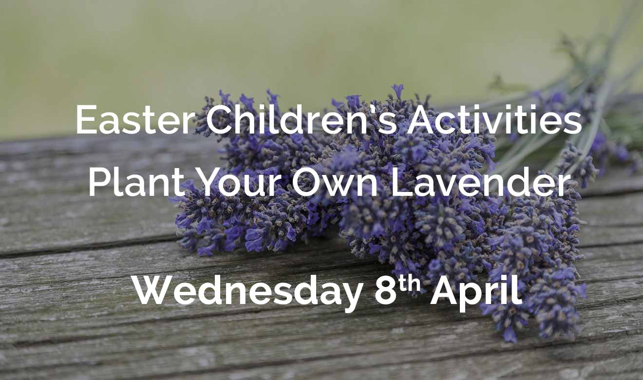 Easter Children's Activities - Plant your own lavender pot - Wednesday 8th April