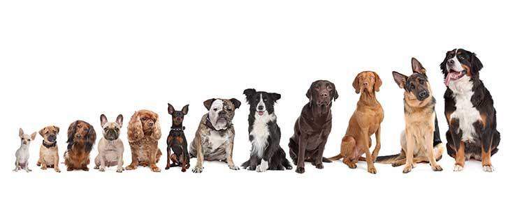 Kids Corner: Fun Facts About Dogs