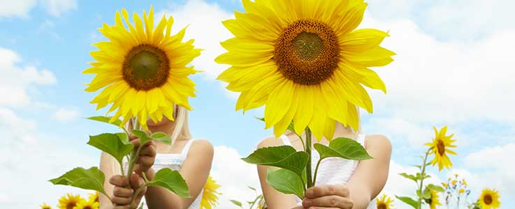 Kids Corner: Sunflower Growing