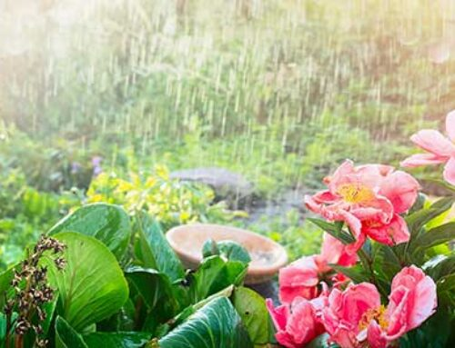 Rainy Days = Free Water for Your Garden!