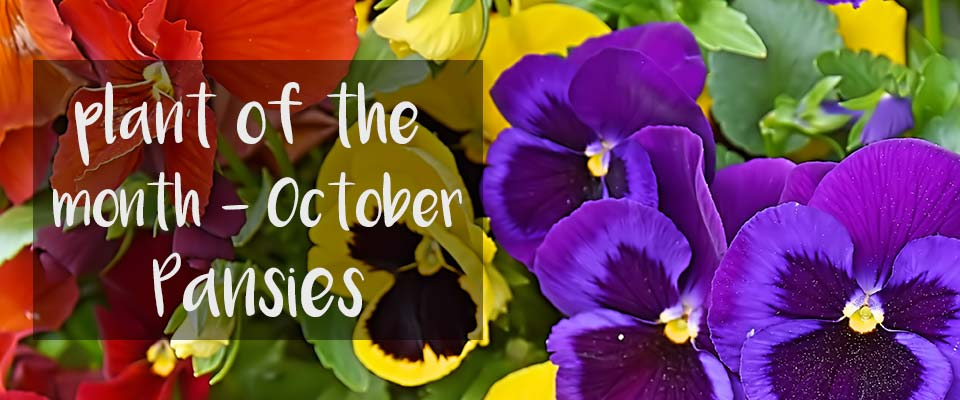 October House Plant of the Month at Burston Garden Centre