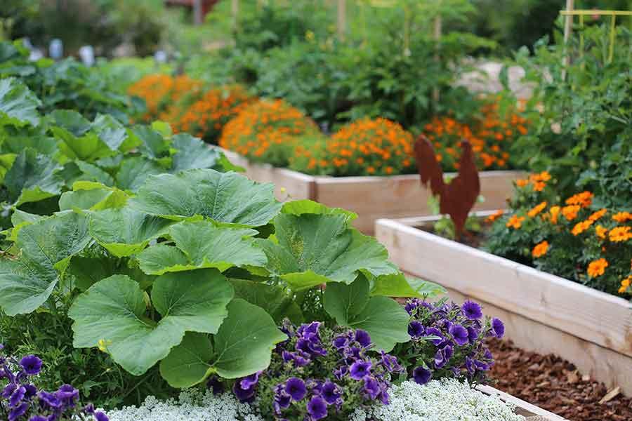 Start Your Kitchen Garden Today