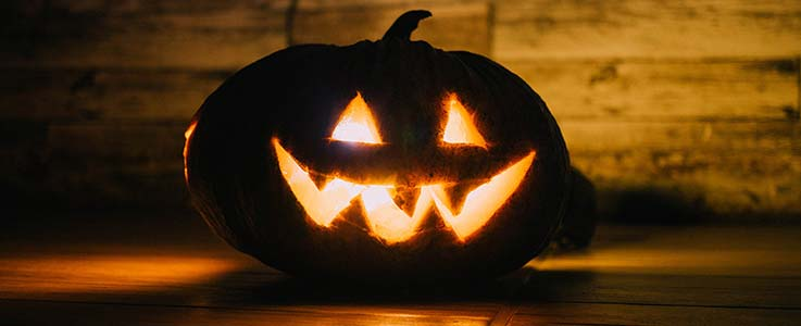 How to grow a pumpkin for Halloween - Burston Blog