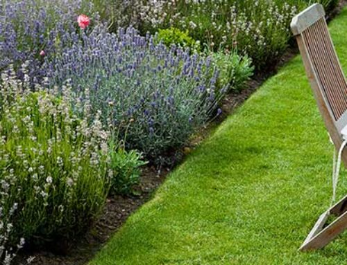 Jobs to do in the garden in August