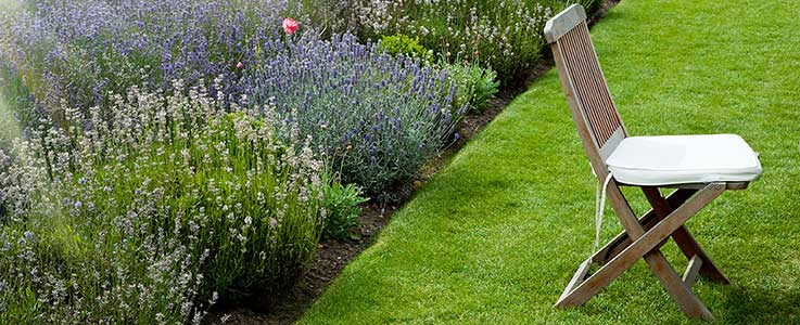 Gardening jobs to be getting on with in August