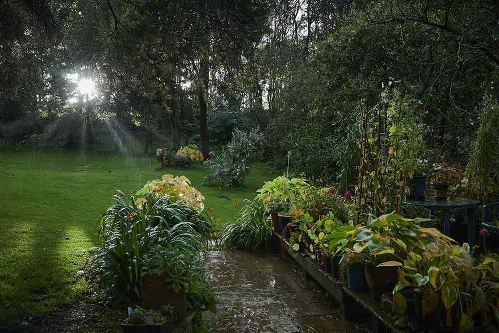 Jobs to do in the garden during September - Burston Gardening Blog