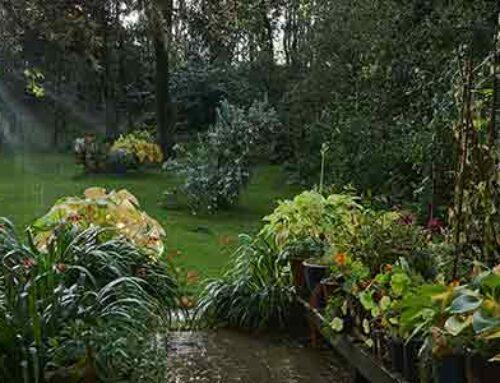 Jobs to do in the garden in September